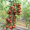 Charakteristika a opis odrody paradajok Spasskaya Tower, jej výnos