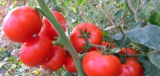 Descripción y características de la variedad de tomate Korneevsky.