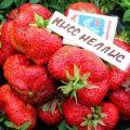 Descripción y características de la variedad de fresa Kiss Nellis, cultivo y reproducción.