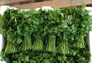 Cómo conservar el cilantro para el invierno y si se puede congelar