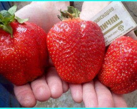 Descrierea și caracteristicile soiului de căpșuni Asia, randament și cultivare