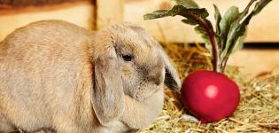 Ce și cum să hrănești iepurele după naștere și cum să crești producția de lapte
