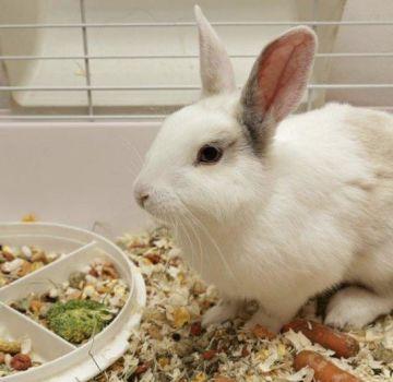 Qué cereales se pueden y no se pueden dar a los conejos, los beneficios y daños de diferentes tipos.