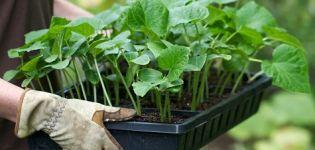 Hogyan lehet az üvegházban uborkákat megfelelően ültetni és gondozni?