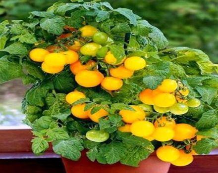 Descripción de la variedad de tomate carbonero, recomendaciones para su cultivo.