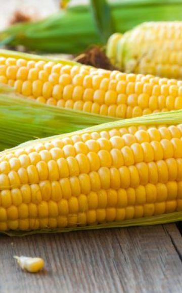 Parhaiden 50 parhaimman maissilajikkeen kuvaukset ja ominaisuudet