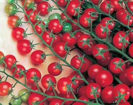 Caracteristicile și descrierea soiului de tomate Krasnaya Grazd, randamentul său