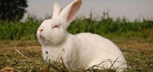 Cría de conejos-aceleradores según Mikhailov, dibujos de jaulas con dimensiones.