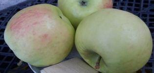 A Phoenix Altai almafajta ismertetése, előnyei és hátrányai, hozam