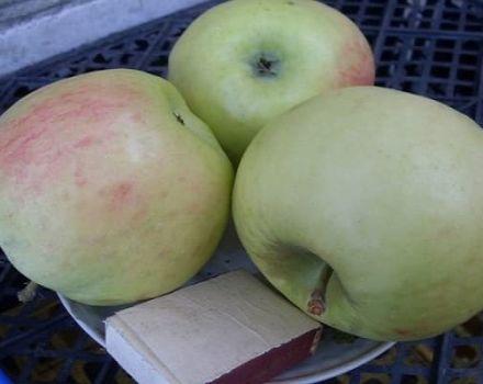 Opis odrody jabĺk Phoenix Altai, výhody a nevýhody, výnos