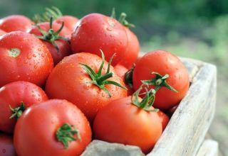 Caractéristiques et description de la variété de tomate Tsunami, son rendement