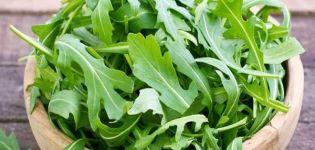 Az évelő sült saláta kitûnõ fajták és fajták a nyitott talajban és az üvegházakban történõ termesztéshez, különös tekintettel az ültetésre és a növények gondozására