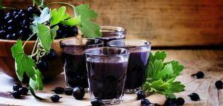 10 rețete ușoare pas cu pas de vin de coacăz negru