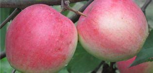 A Stroyevskoe almafajta leírása és jellemzői, termesztése és gondozása