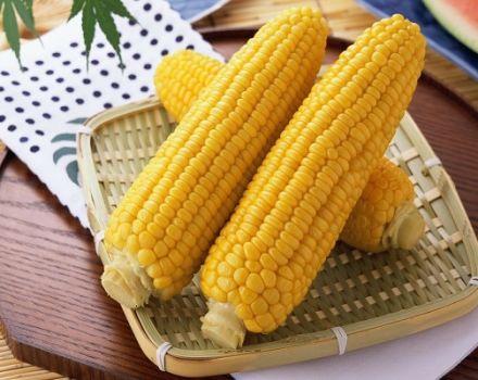 Beneficios y daños para la salud del maíz, propiedades medicinales y contraindicaciones.