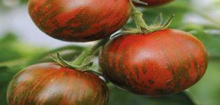 Charakteristika a opis odrody paradajok Pruhovaný let, recenzie záhradníkov