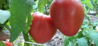 Características y descripción de la variedad de tomate Lazy, su rendimiento.