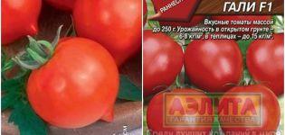 Charakteristiky a opis odrody rajčiaka Hali Gali, jeho výnos