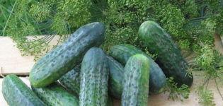 Descripción de la variedad de pepino Atlantis f1, características de cultivo y rendimiento.