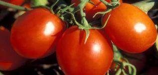Descrierea soiului de roșii Stanichnik, caracteristici de cultivare și îngrijire