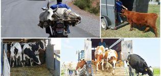Normas para el transporte de vacas y qué transporte elegir, la documentación necesaria.