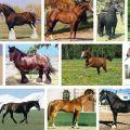 Lista y descripciones de las 40 mejores razas de caballos, características y nombres