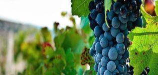 Descripción y características de la variedad de uva Bastardo, historia y reglas de cultivo