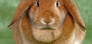 Descrierea iepurilor din rasa de ovine și de păstrare acasă