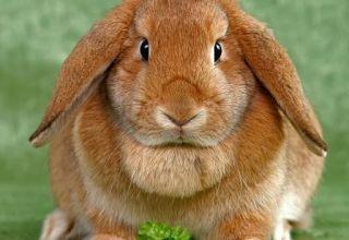 ¿Cuántos años pueden vivir los conejos en casa, términos para diferentes razas?