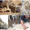 Čo sa dá vyrobiť z ovčej vlny, druhov a klasifikácie vlákien