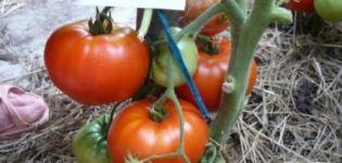 Khlebosolny-tomaattilajikkeen ominaisuudet ja kuvaus, sen sato