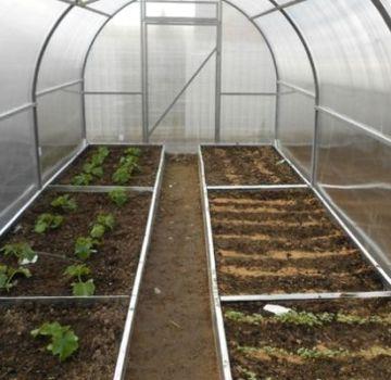 A paradicsom ültetésének alapvető szabályai 3x6 üvegházban