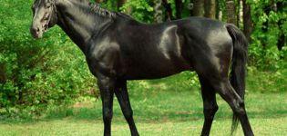 Descripción de la raza de caballos de pura raza y características del mantenimiento de los caballos.