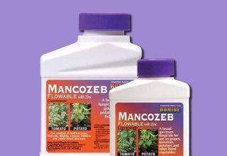A Mancozeb gombaölő szer használati utasításai, a gyógyszer összetétele és hatása