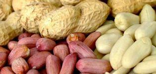 Nocivitatea și beneficiile alunelor pentru organismul uman, proprietățile și vitaminele din alune