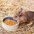 ¿Se puede dar avena a los conejos y cómo es correcto?