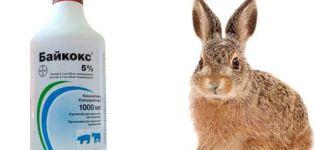 privind utilizarea Baykoks pentru iepuri, compoziție și termen de valabilitate