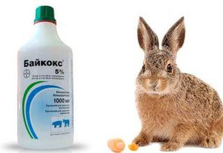 sobre el uso de Baykoks para conejos, composición y vida útil