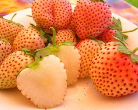 Descrierea și caracteristicile căpșunilor de ananas, plantare și îngrijire