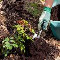 Cómo usar el fertilizante de turba correctamente y para qué sirve.