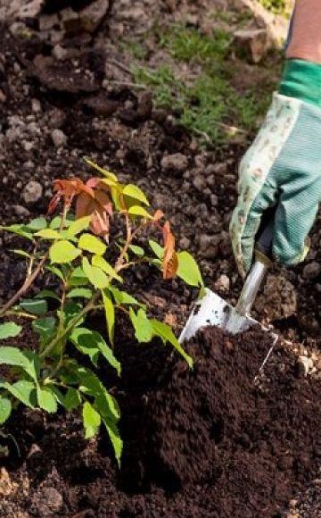 Ako správne používať rašelinové hnojivo a na čo je určený