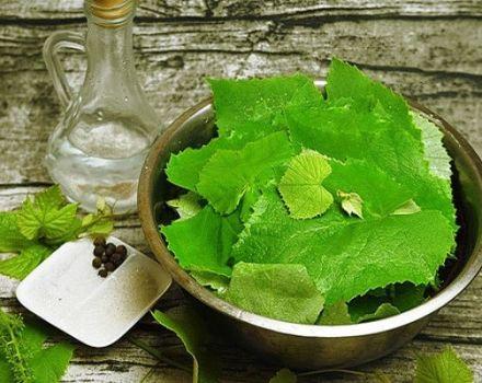 Recetas para encurtir hojas de parra para el invierno.