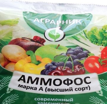 Návod na použitie a zloženie hnojiva Ammophos, ako ho množiť