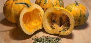 Descripción de la variedad de calabaza gimnosperma, sus características y cultivo.