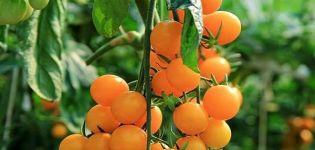 Descrierea soiului de roșii Capacul portocaliu, caracteristicile și randamentul acestuia
