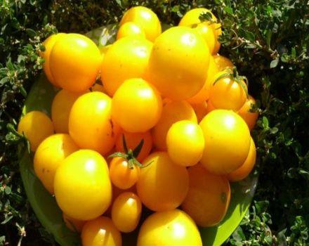 Descripción de la variedad de tomate Albaricoque, características de cultivo y cuidado.