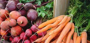 ¿Es posible plantar remolacha o eneldo y zanahoria en el mismo jardín?