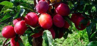 Descrierea soiului de prune Generalskaya, care crește și are grijă de copac