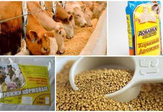 A szarvasmarha takarmány-élesztőinek kémiai összetétele és használati utasításai