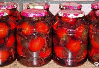 Receptek a paradicsom pácolásához bazsalikommal a téli időszakra